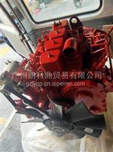 工程机械康明斯4BTAA3.9发动机总成4BT3.9-C100/4BT3.9-C100