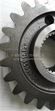 从动圆柱齿轮/250ZAS01-051