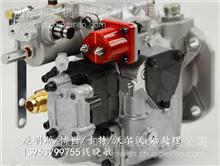 枣庄菏泽康明斯代理商燃油泵3045281NT855发动机总成/代理